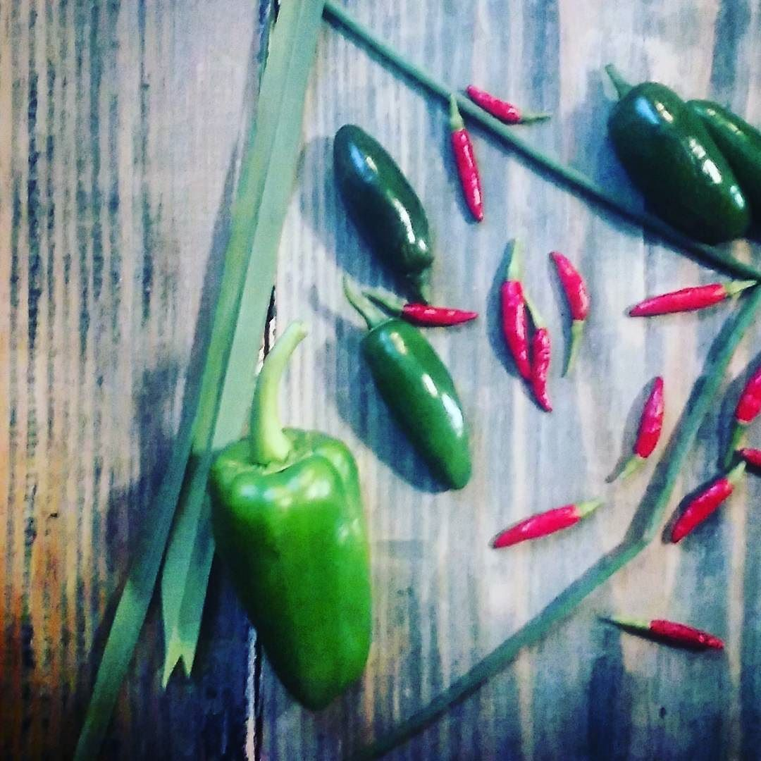 #growyourown bell peppers jalapenos cheyenne #peppers chives #herbs and lemongrass easily at home. #containergardening is simple and so worth the small amount of effort. #sustainable #selfreliance #gardening healthy wellness