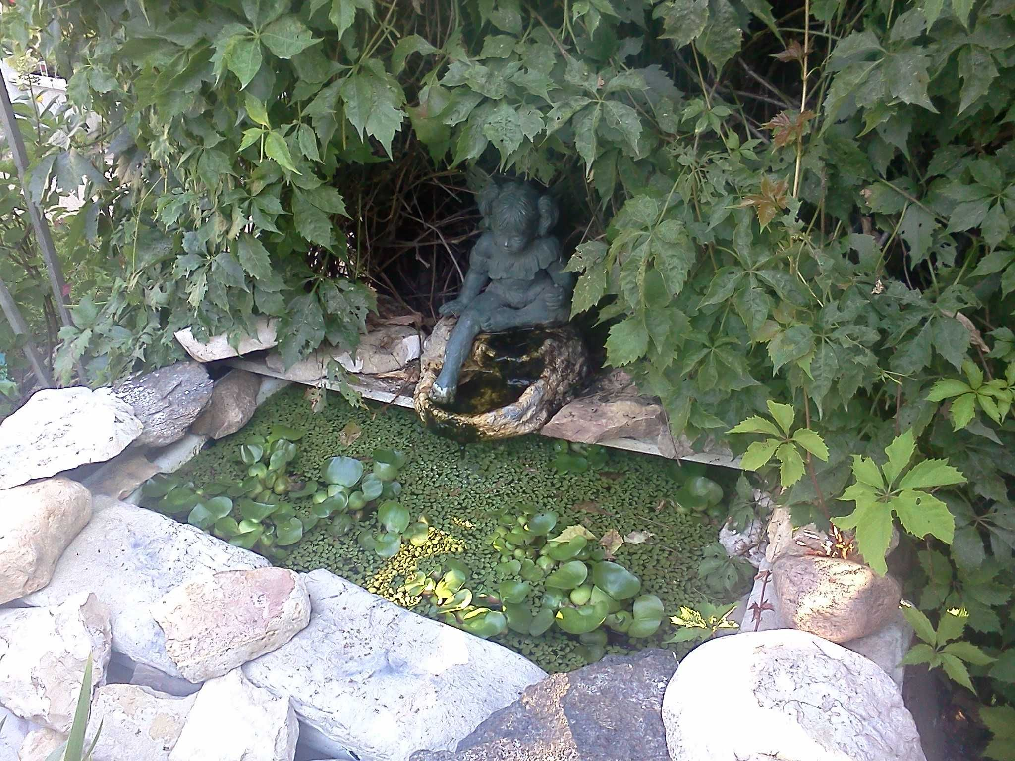 Bathtub pond gardening and outdoor structures for Fish pond structure