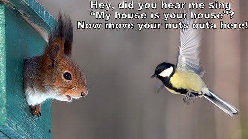 Squirrel vs. Bird House Wars.
