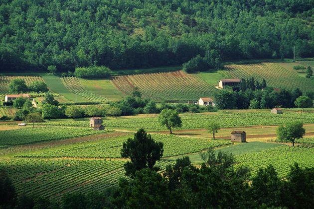 Vignoble de Cahors #espritlot #tourismelot