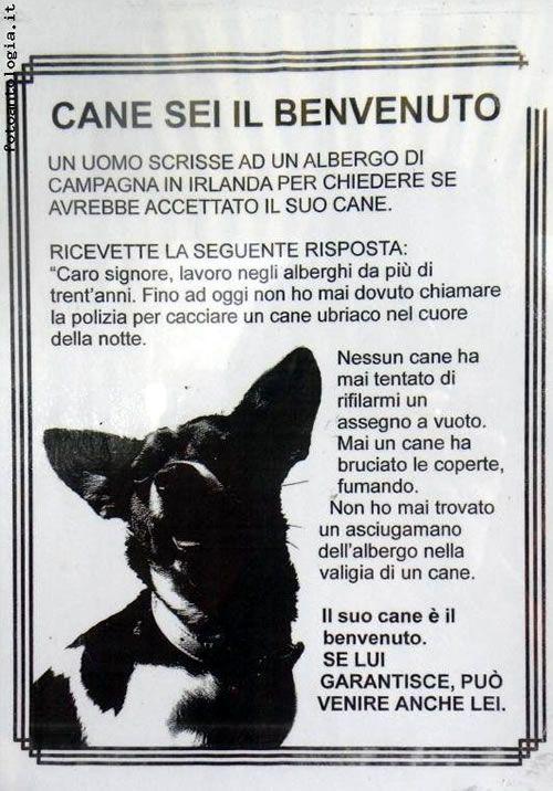Super cuccioli di cane jack russel con frasi - Cerca con Google  PC24