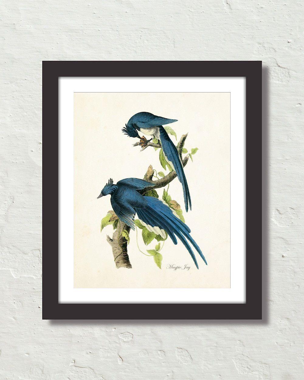 Vintage Audubon Magpie Jays Canvas Art Print