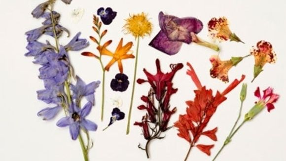 Dried flower crafts here are a few of the many fun crafts you can do dried flower crafts here are a few of the many fun crafts you can do with dried or pressed flowers by lisa freedman mightylinksfo