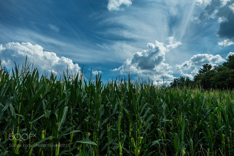 Cornfield With Clouds by Johnkng. @go4fotos