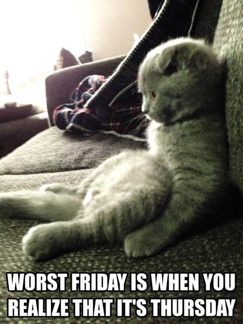 What It S Not Friday Yet Funny Animals Funny Photos Funny Pictures