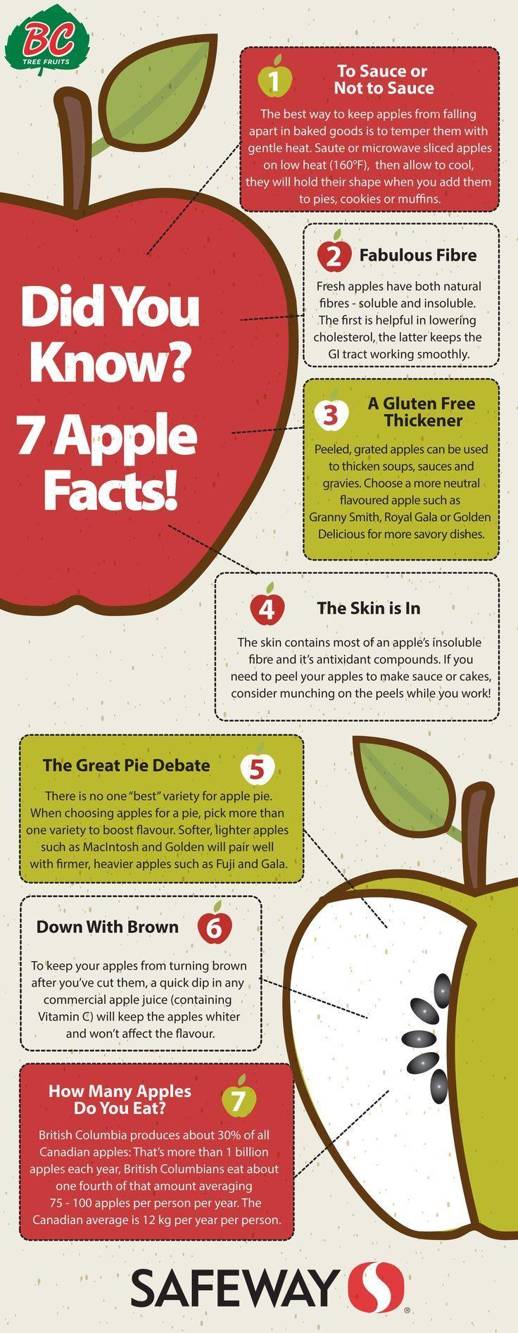 Apples for dogs 101 can dogs eat them apple facts