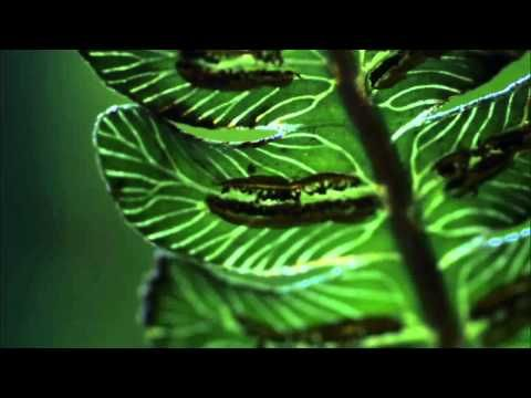 Insane footage of a carnivorous caterpillar in hawaii. AHH!