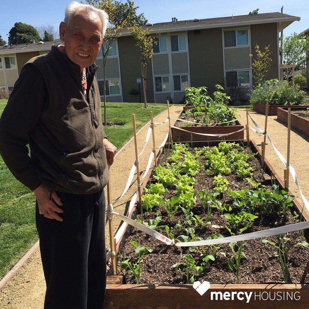 This Mercy Housing California Resident Loves Tending His Garden Plot He S Growing Garlic Herbs Butter Lettuce And Kale Growing Garlic Garden Plots Herbs