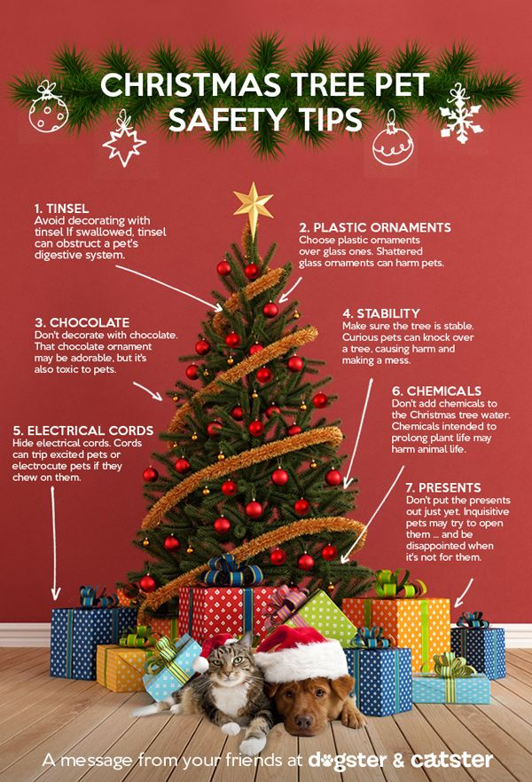 infographic keep your pets safe around the christmas tree dogster