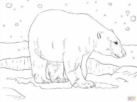 Raskraski Belyj Medved Na Ldine Skachat I Raspechatat Besplatno Belyj Medved Belye Medvedi Raskraski