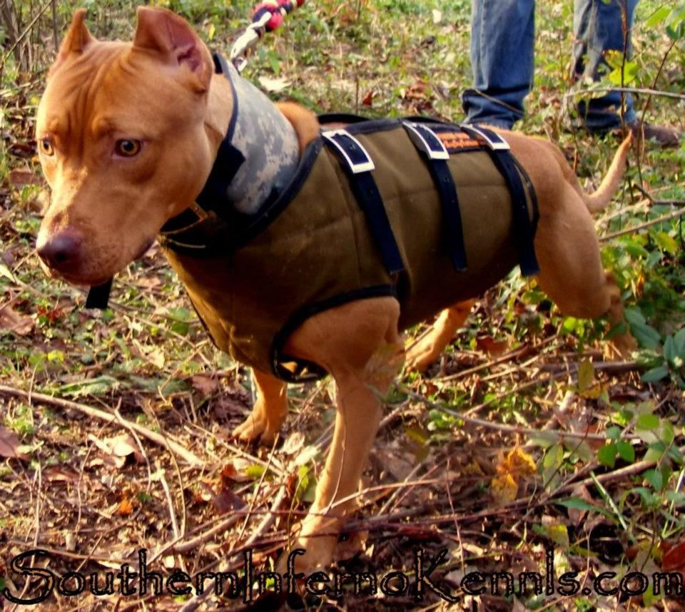 Hunting Dog Training Magazines