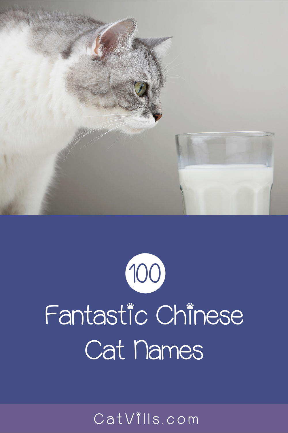 100 Exceptional Chinese Cat Names For Your New Kitten Catvills In 2020 Cat Names Kitten Names Cute Cats And Kittens