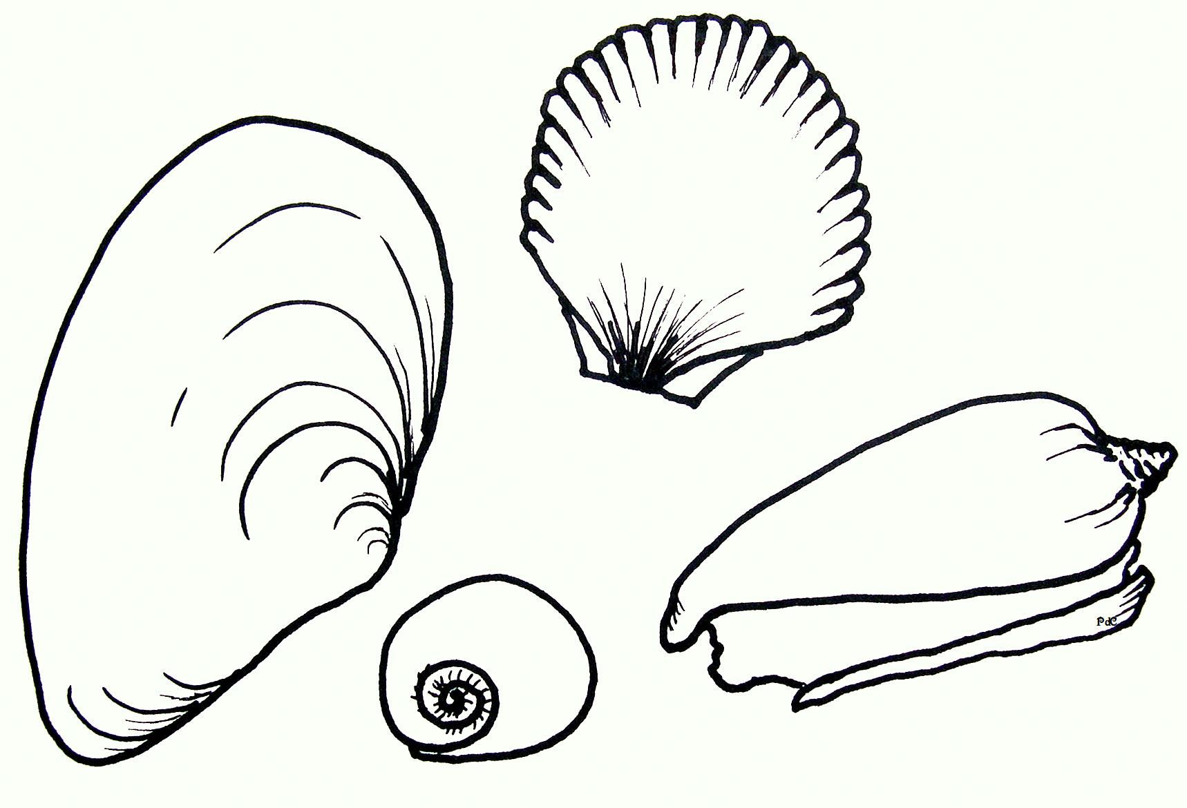 seashells Coloring pages, Truck coloring pages, Cars