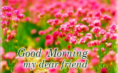 Good morning my best friend pictures