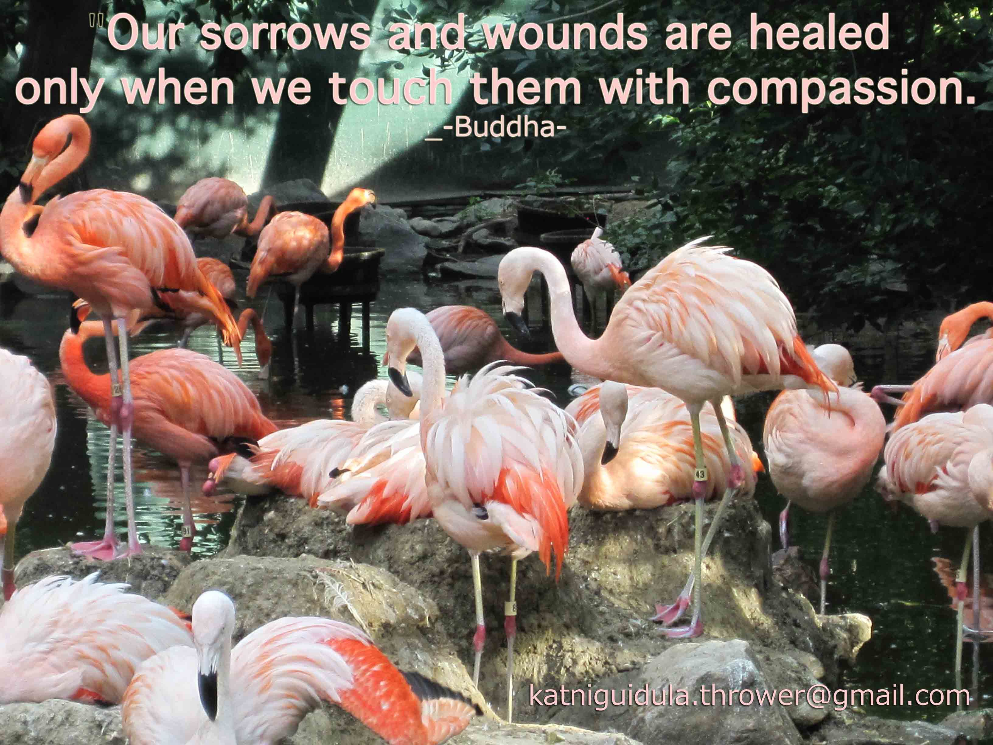 """""""Our sorrows and wounds are healed only when we touch them with compassion.""""  - Buddha -"""