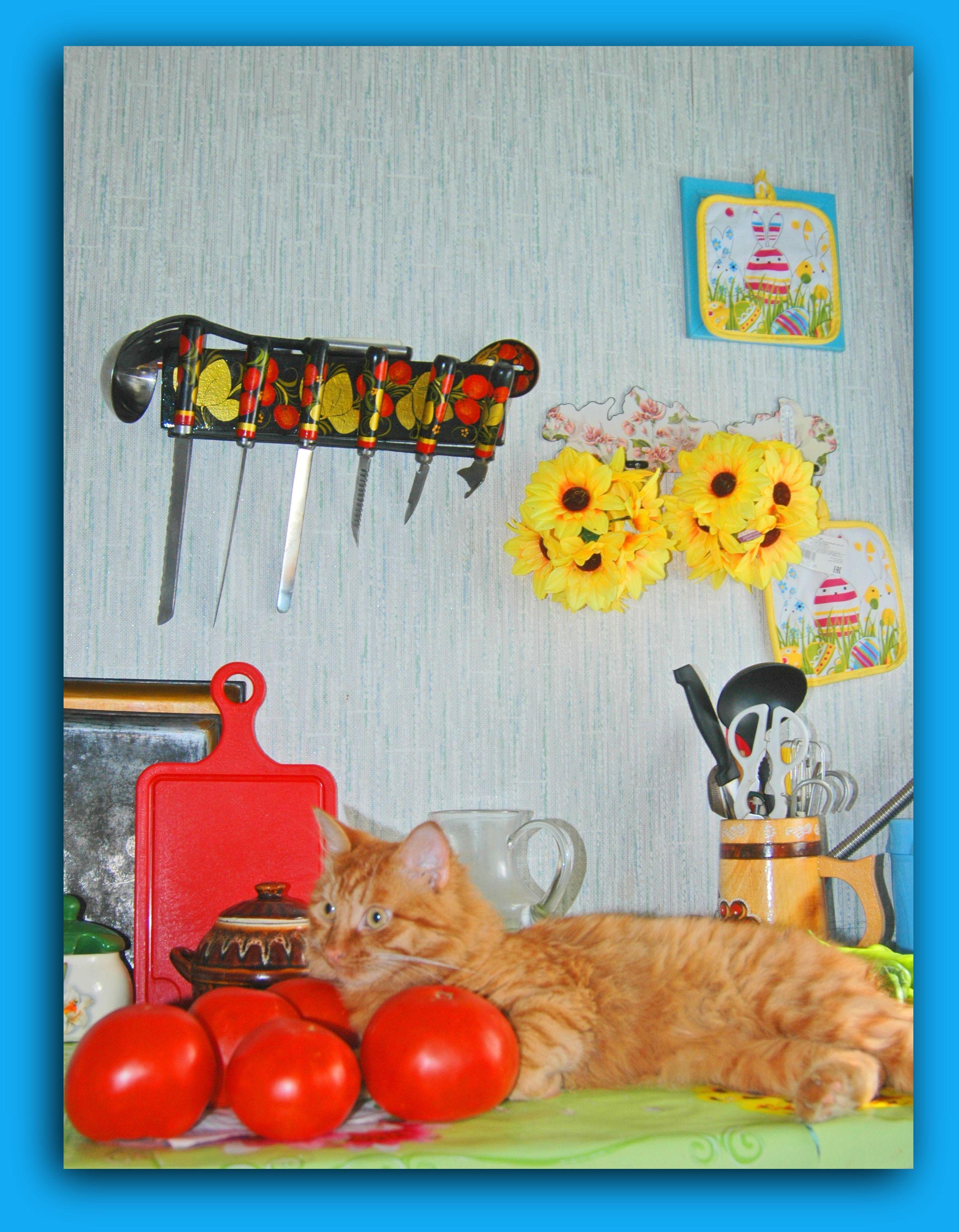 кот в помидорах.