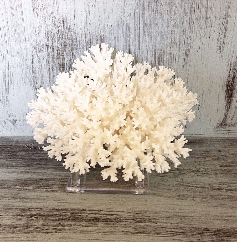 White Lace Coral Branch On Acrylic Base Nautical Beach Decor
