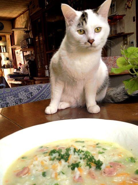 久しぶりに塩麹を作ったので豆乳使いのクリームリゾットにしました。 - 37件のもぐもぐ - 塩麹豆乳リゾット by mayuwo