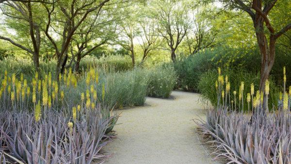 Sunnylands Center Gardens Ojb Landscape Architecture В 400 x 300