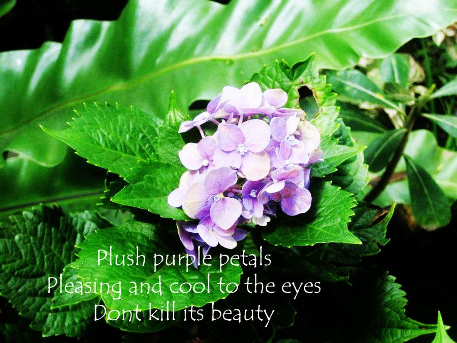 Image Result for Haiku Poems Nature Haiku Poems Pinterest