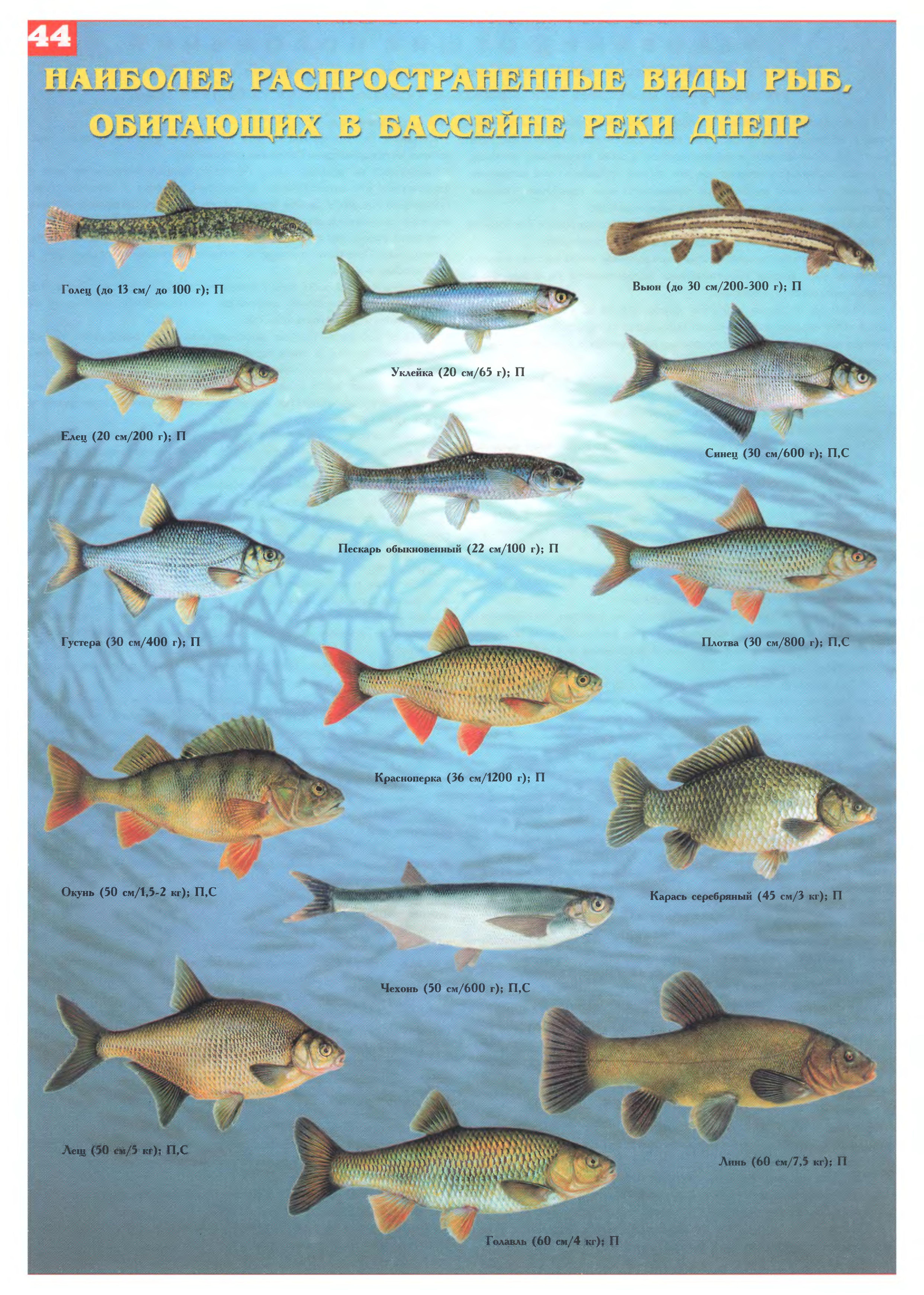 того, какие пресноводные рыбы украины фото и названия миф ненавязчиво