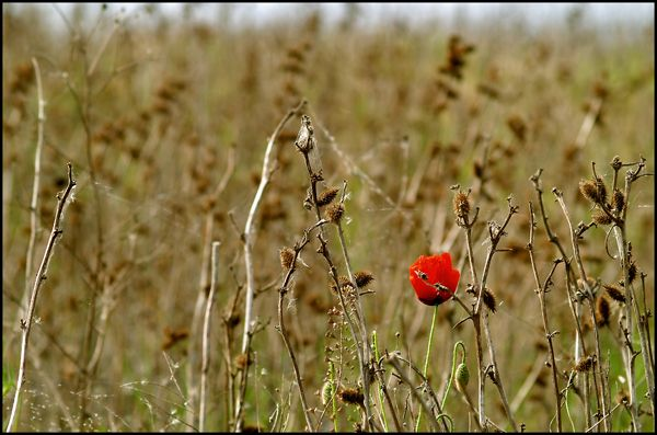 Image Result For Dead Flower Field