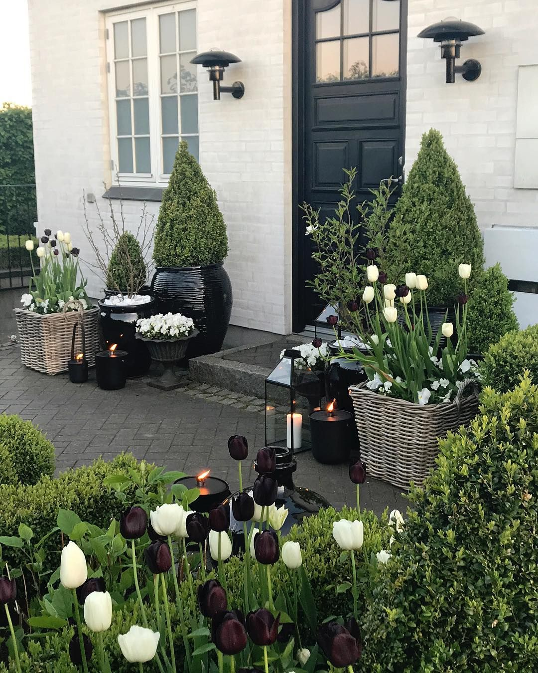 """Photo of Gina på Instagram: """"Vi feirer tulipanens dag 🌷 God fredag, kjære IG-venner ul # tulipaner #queenofthenight"""""""