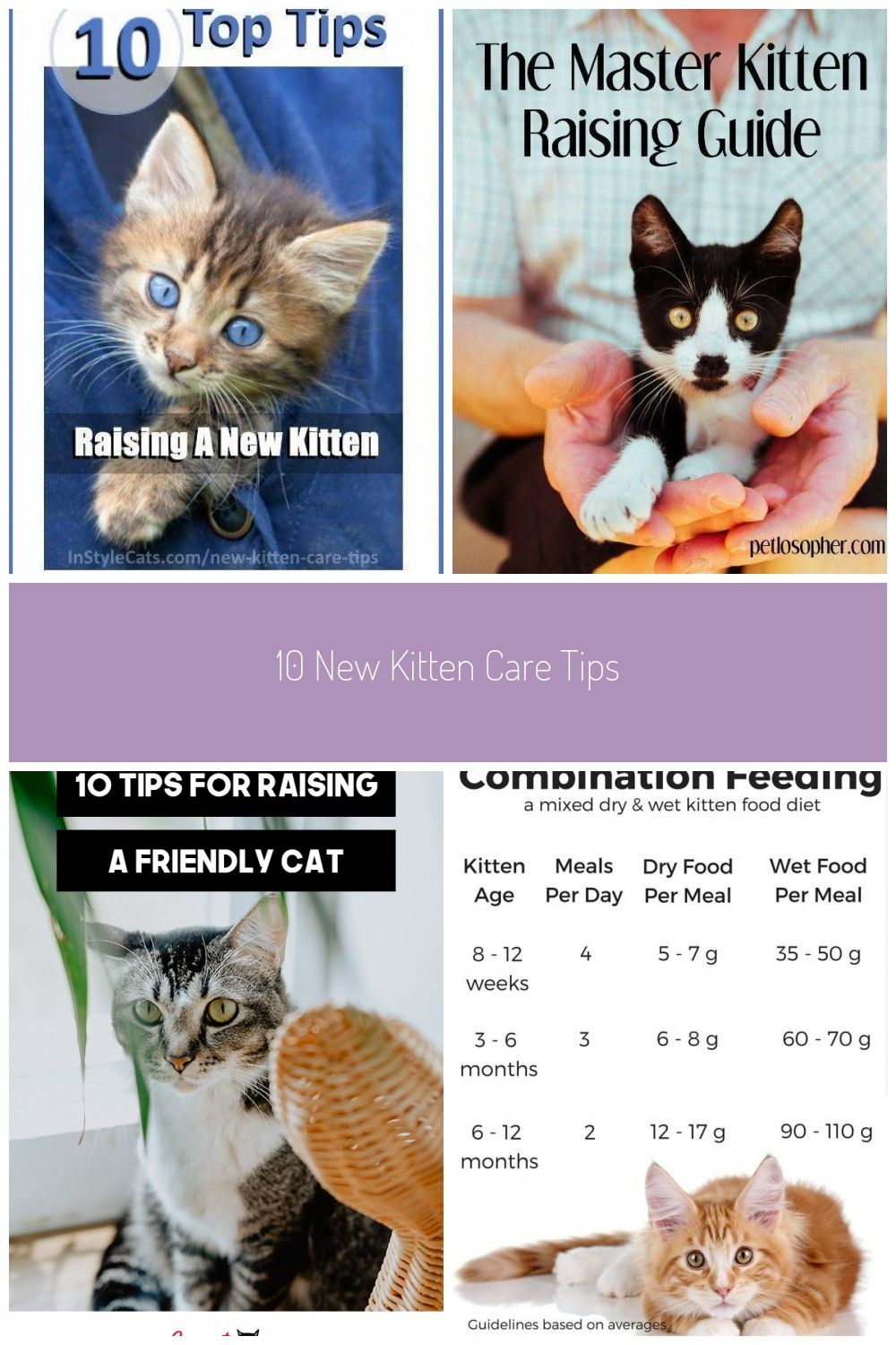 10 New Kitten Care Tips Kitten Care Cat Care Kitten Proofing