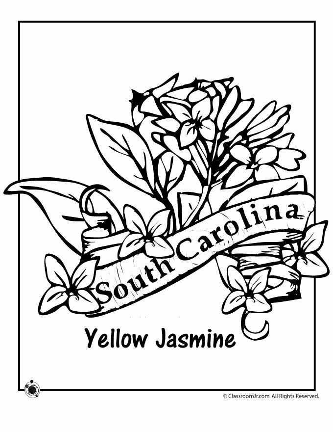 Wyoming State Flower Coloring Page Beautiful State Flower