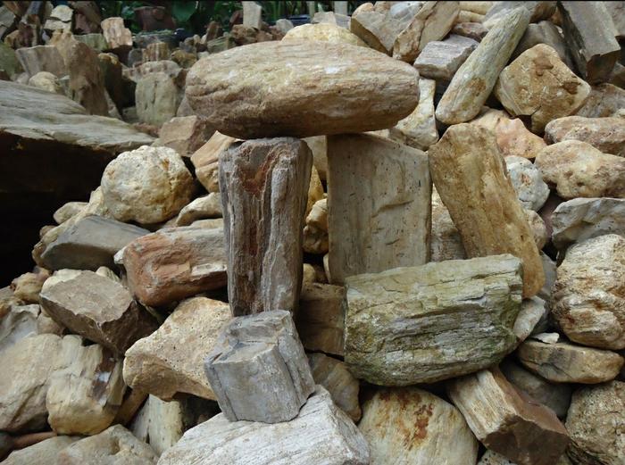 Pada dasarnya Fosil adalah sisa-sisa atau bekas-bekas ...