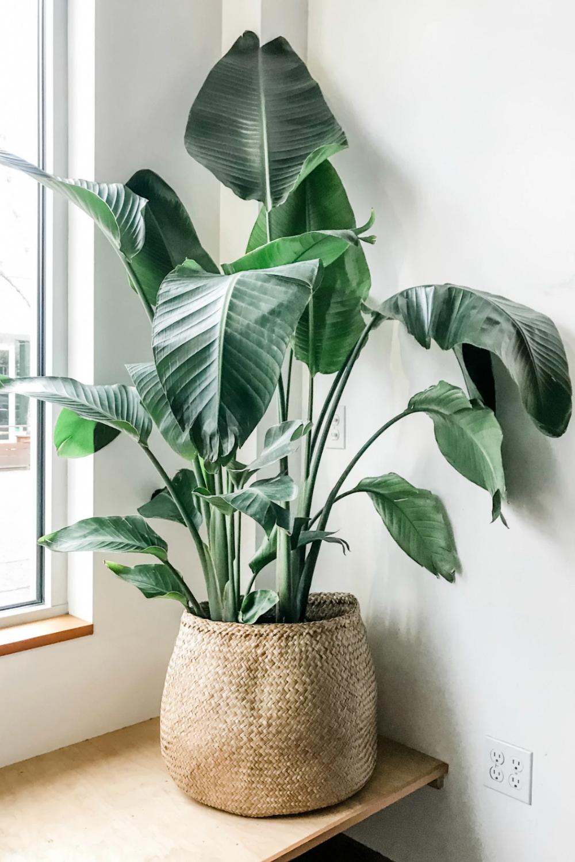 Pin on Decoracion con Plantas