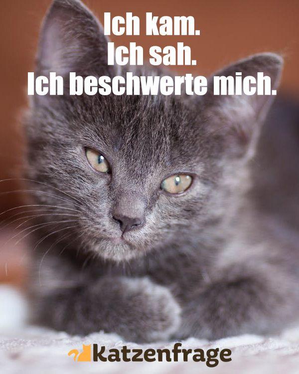 Lustige Sprüche Katze