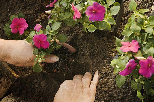 Come Coltivare La Balsamina Nel Tuo Giardino Prato E Giardino