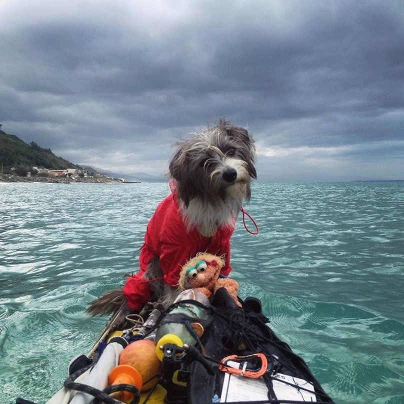 This Guy Quit His Job To Travel On A Year Kayaking Quest With - Guy quits his job to go on epic adventures with his husky