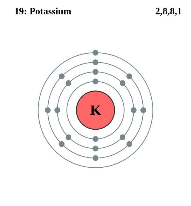 See the electron configuration of atoms of the elements activities atom diagrams potassium atom ccuart Images