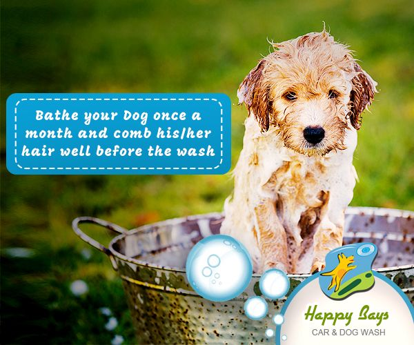A clean dog is always a happy dog pet care tips dog and pet wash happy bays car and dog wash providing car wash and dog wash in calgary we also offering pet wash self serve dog and car wash solutioingenieria Choice Image