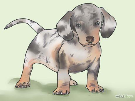 Potty Train A Dachshund Dachshund Dog Dachshund Puppies Dachshund