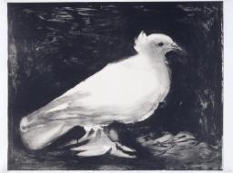 Pablo Picasso 'Dove', 1949 © Succession Picasso/DACS 2016