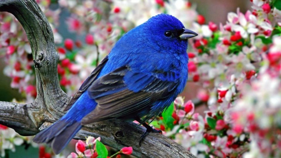 spring bird on a - photo #28