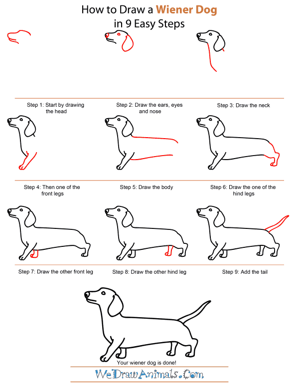 How To Draw A Dog Dr Odd Drawing Dachshund Drawing Drawings