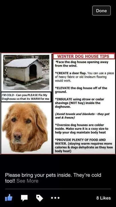 Winter Dog House Tips Please Bring Your Dog Inside Winter Dog