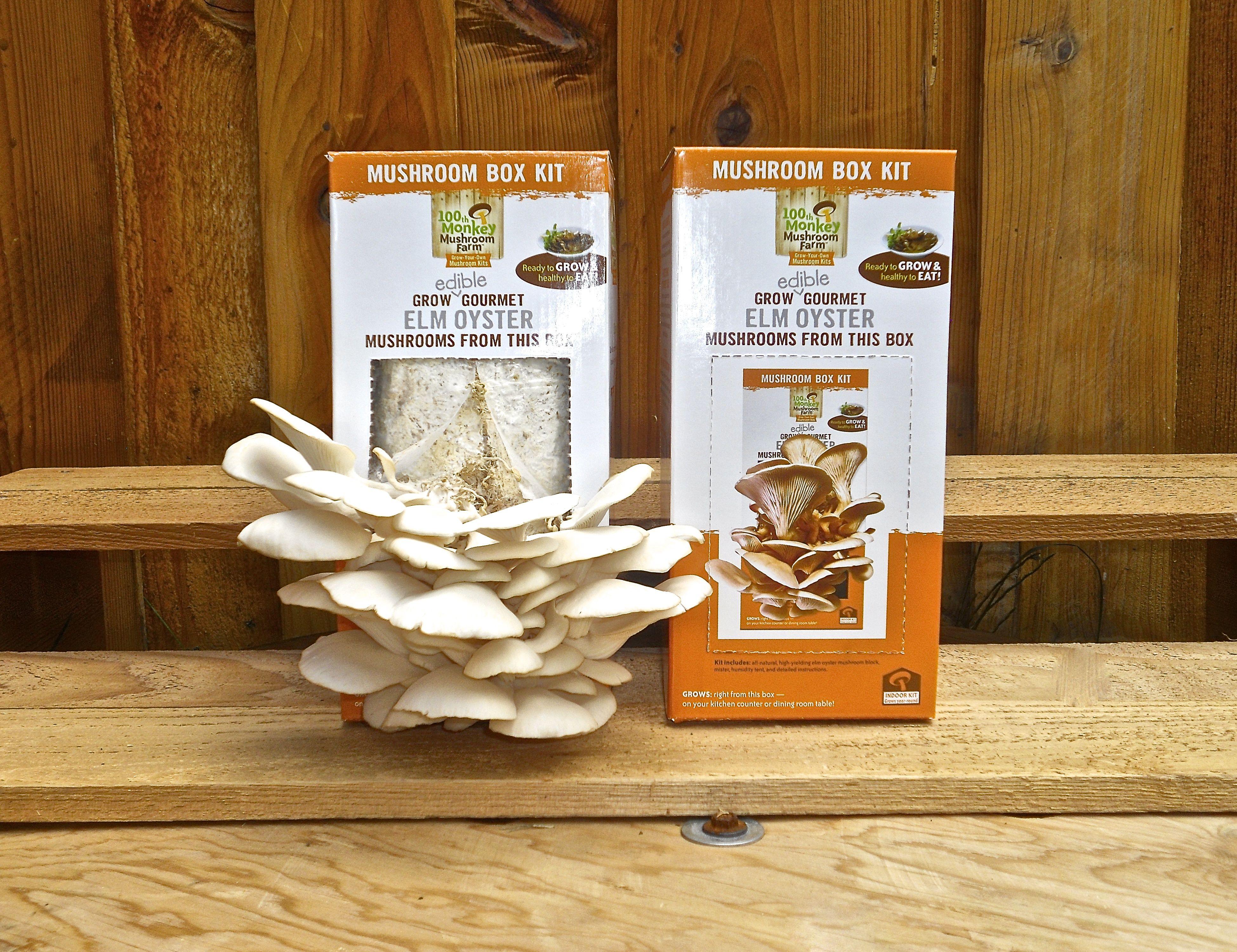 Grow a mushroom garden with this oyster mushroom grow box! | Elm ...
