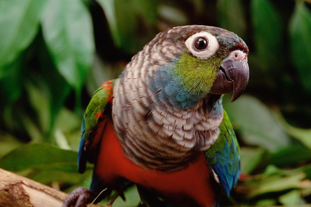 What the Amazon fires mean for wild animals Rainforest