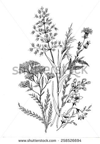 Hand drawn herbal flowers isolated on white background vector illustration - stock vector