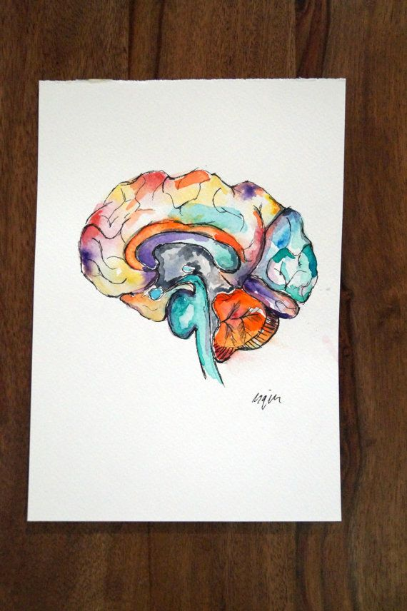 Medical Anatomy Art- Watercolour Painting- Brain Section- SMALL ...