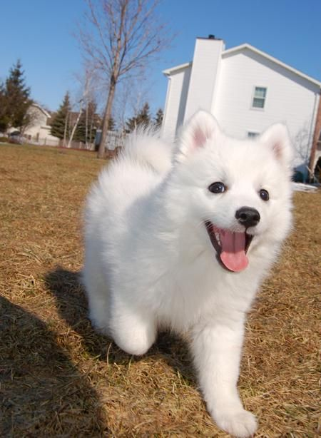 This Is The Breed My Milo Is I Wish I Could Ve Seen Him This