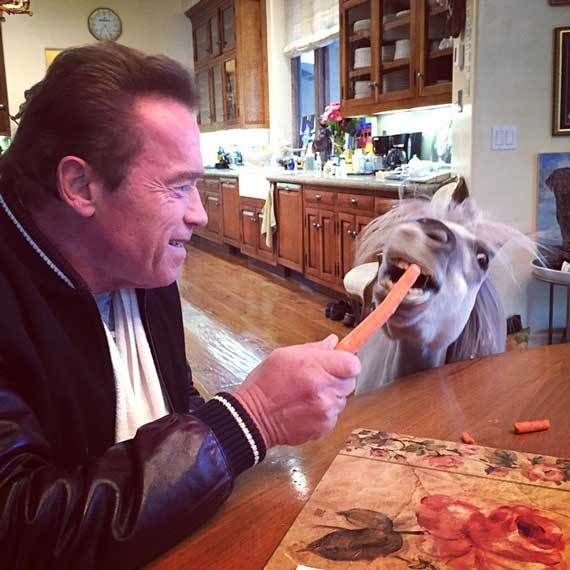 Arnold Schwarzenegger And His Pet Pony Whiskey Bond Over Breakfast Photo Arnold Schwarzenegg Arnold Schwarzenegger Arnold Schwarzenegger Funny Funny Memes