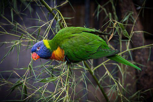 Vogel, Tiere, Federn, Papagei, Grün