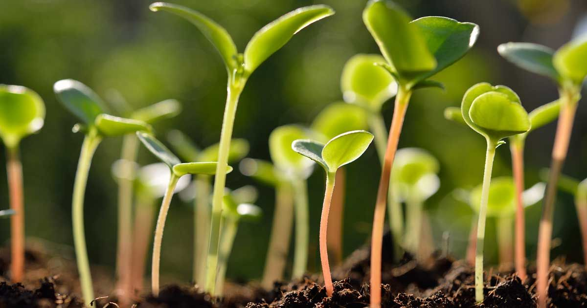 How To Improve Your Seed Germination Using Epsom Salt