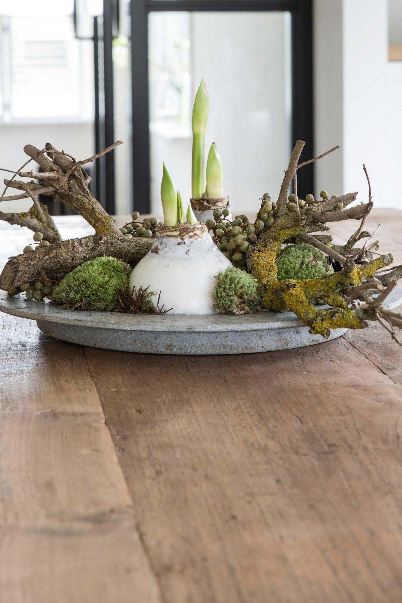 Bloemstuk 2 idee n voor het huis pinterest flowers for Amaryllis planter bulbe